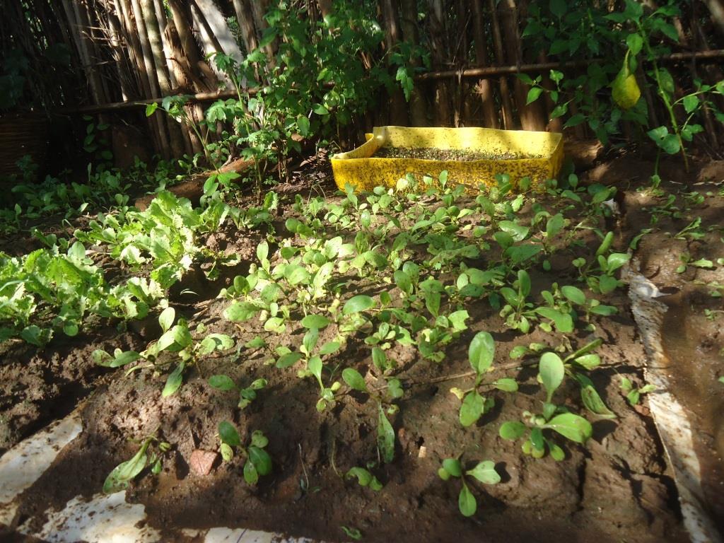 Pénière en permaculture au Togo